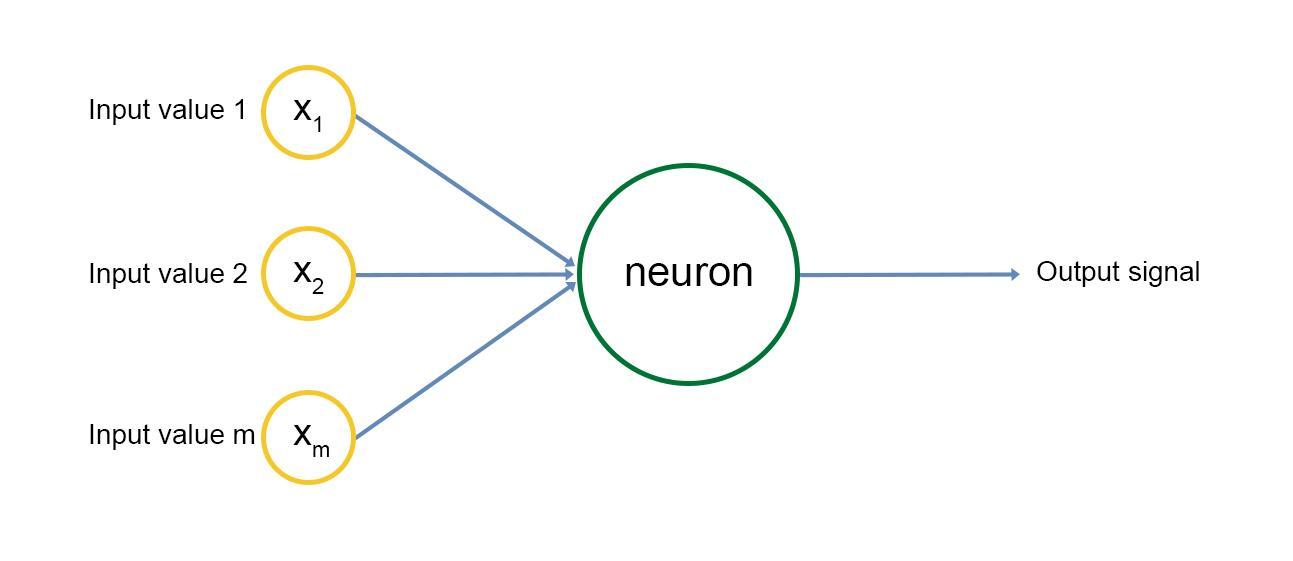 multiple neurons